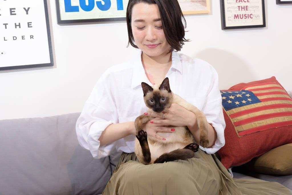 猫が好きで、猫が好きで、猫が大好きなんです